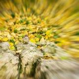 Sottragga il fondo vago nei colori dorati, il piccolo uccello, passero di autunno sta prendendo il sole al sole stagioni Immagini Stock