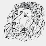 Sottragga il leone Fotografie Stock