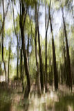 Sottragga la foresta Immagine Stock Libera da Diritti