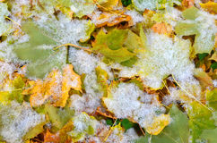 sottragga la priorità bassa La caduta e l'inverno incontrati fotografia stock libera da diritti