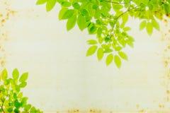Sottragga la priorità bassa verde del foglio Immagine Stock