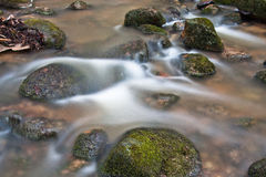 Souce stream. Natural fresh and purity stream stock photos