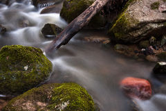 Souce stream. Natural fresh and purity stream Royalty Free Stock Photos