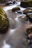 Souce stream. Natural fresh and purity stream royalty free stock photo