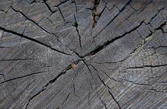 Souche, bois de construction Photo libre de droits