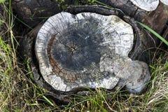 Souche en bois Photos libres de droits