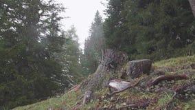 Souche simple d'arbre banque de vidéos