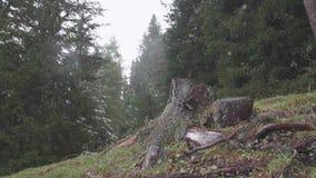 Souche simple d'arbre clips vidéos