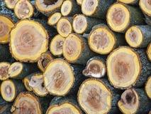 Souches empilées de bois de prune Photo stock