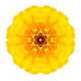 Souci concentrique jaune Mandala Flower Isolated sur le blanc images stock