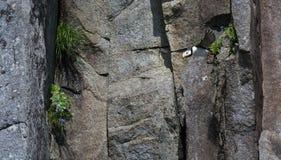 Soufflage de plongée du visage de roche photographie stock libre de droits