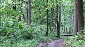 Souffle de jeune forêt de ressort avant la pluie banque de vidéos