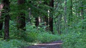 Souffle de jeune forêt de ressort clips vidéos