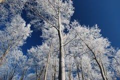 Souffle glacial de l'hiver Image libre de droits