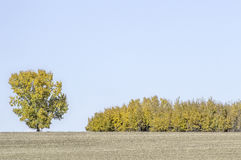 Souffle prenant Autumn Colors Photos stock