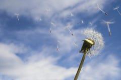 Soufflement dans le vent image libre de droits