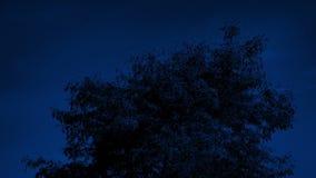 Soufflement supérieur d'arbre autour la nuit banque de vidéos