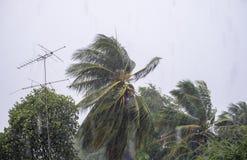 Soufflez la tempête de vent pleuvant avec le poteau de noix de coco et d'antenne photographie stock libre de droits