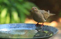 Souhait-colombe i photos libres de droits