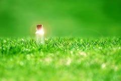Souhait des bouteilles sur l'herbe Photo libre de droits