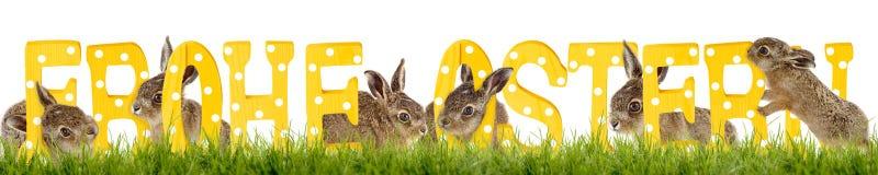 Souhait Joyeuses Pâques de lapin de Pâques Photographie stock