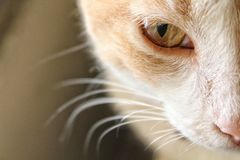 Soul of a cat. The thing you can see through the cat& x27;s eyes royalty free stock photo
