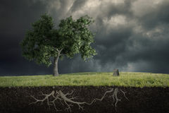 The soul of the nature. A tree cries the loss of other cut tree Stock Photography