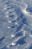 Soulagement des copies de patte dans la neige images stock
