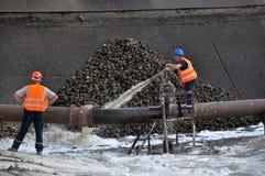 Soumission de la betterave à sucre piles_5 Image stock