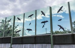 Sound-absorbing glass screen along the road in the city center. Black contours of birds on the glass Royalty Free Stock Photo