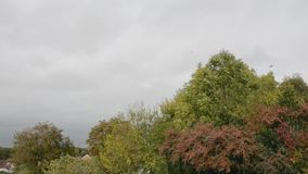 Sound of wind and rooks in the trees in early autumn stock footage
