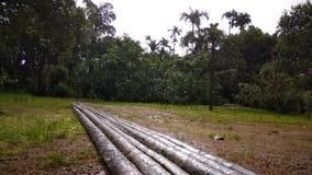 Soundarya di Malenadu Fotografia Stock Libera da Diritti