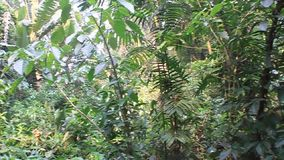 Sounds of a jungle. In eco-archaeological park Los Naranjos, Honduras stock video footage