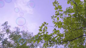 Soup bubbles in nature stock footage