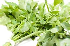 Soup greens Stock Image
