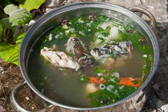 Soup made from carp. Pot of soup made from carp Stock Photo