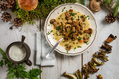 Soup made of wild mushrooms stock photos