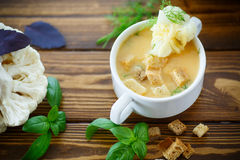 Soup pureed cauliflower. In a plate on the table Royalty Free Stock Image