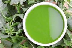 Soupe à épinards Photo stock