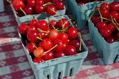 Sour Cherries Stock Photography