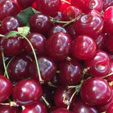 Sour cherries. Close up of sour cherries Royalty Free Stock Image