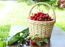 Sour cherries Royalty Free Stock Photo