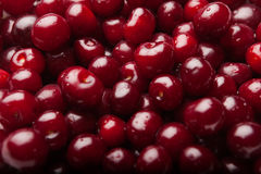Sour cherries. Red sour cherries, close-up view Stock Photography