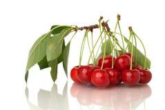 Sour cherries on white Stock Photo