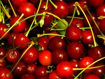 Sour cherry. A lot of sour cherrys Royalty Free Stock Photos