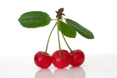 Free Sour Cherry Royalty Free Stock Photos - 951158