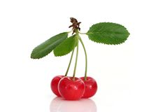 Sour cherry Stock Photos