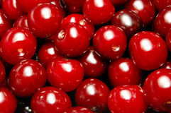 Sour cherry background Stock Photography