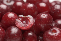 Sour cherry fruits Stock Photography