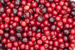 Sour cherry fruits Stock Photo